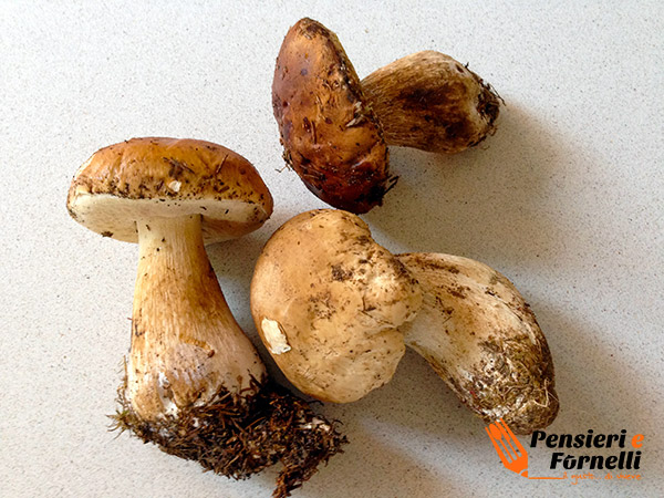 funghi porcini da pulire